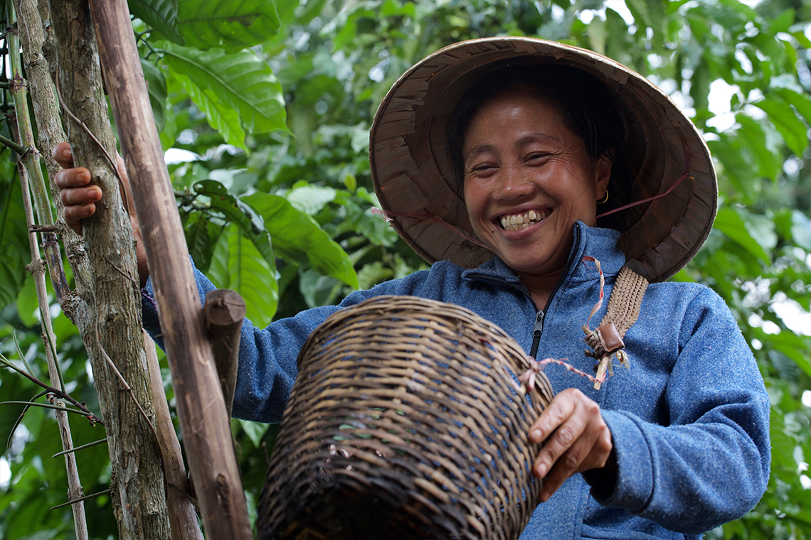 Coffee Picker - Bolaven Plateau